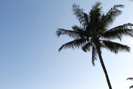 palm tree in clear blue sky