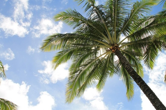 palm tree in sky with clouds