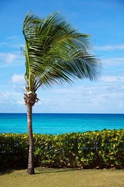 palm tree on coast