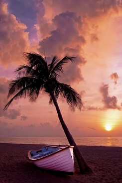 palm tree palm ocean