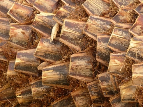 palm tree root palm wood