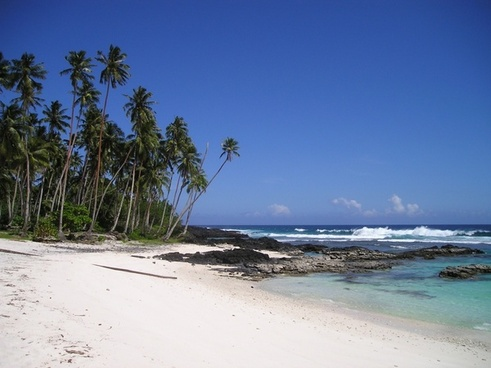 palm trees beach beautiful beach