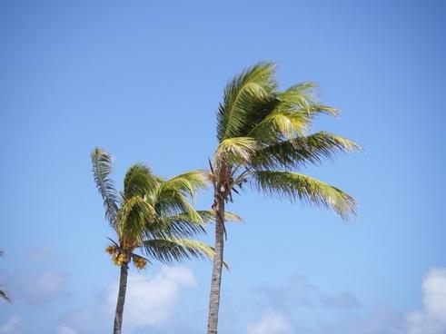palm trees beach mauritius