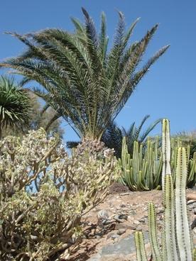 palm trees mediteran