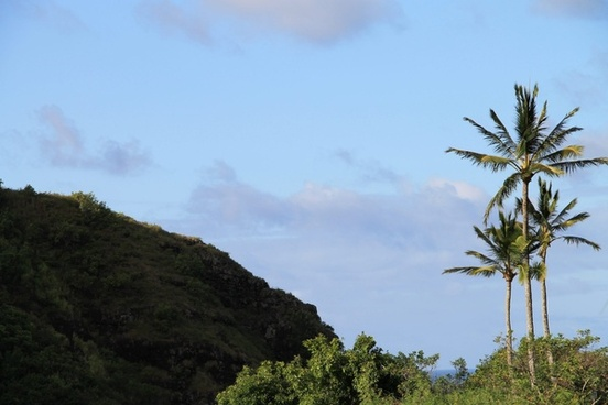 palm trees next to hill