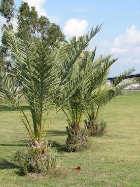 palm trees port lavaca