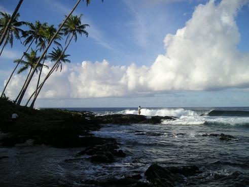 palm trees sea beach