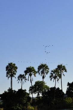 palm trees sky horizon