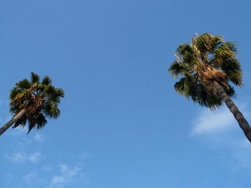 palm trees tree sky