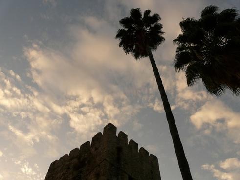 palm trees tribe high