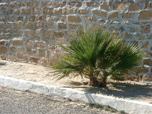 palm wall tunisia