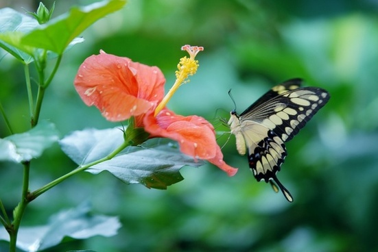 papilio cresphontes butterfly animal