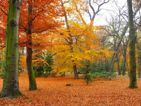 park autumn garden