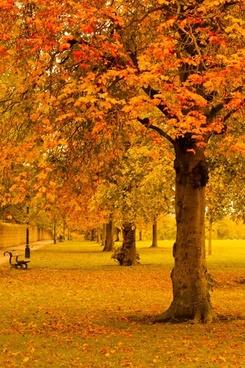 park in yellow autumn