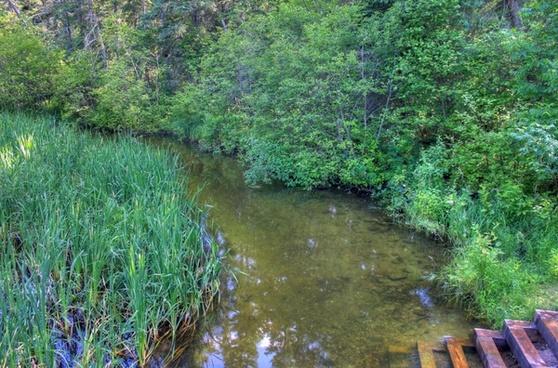 parks steps down the mississippi river at lake itasca state park minnesota