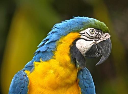 parrot bird yellow