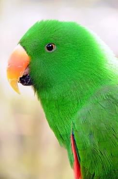 parrot birds parakeet