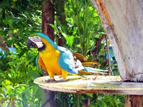parrot natural environment