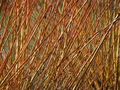 pasture tree plant