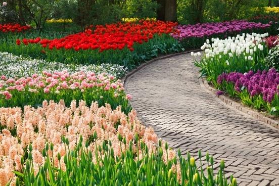 path among flowers