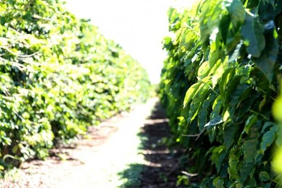 path between green vines