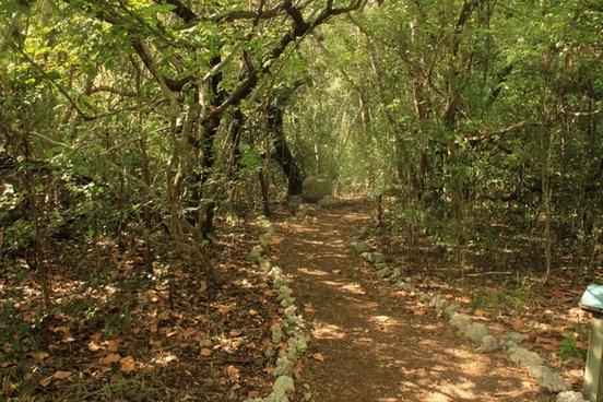 path between trees at key largo florida