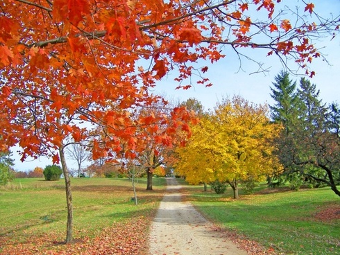 path in autumn trees