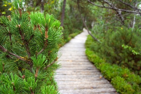 path in the wilderness of peat