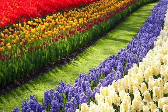 path through flowers