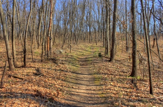 path through the forest at kettle moraine south wisconsin
