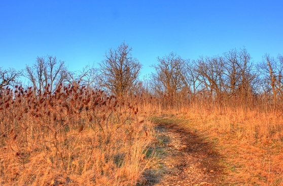 path to the top at kettle moraine south wisconsin