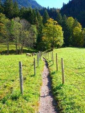path trail meadow