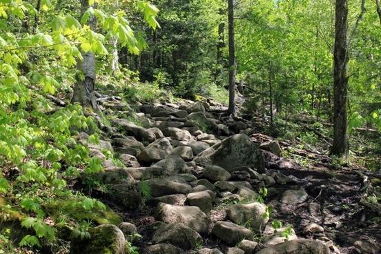 pathway up in adirondack mountains new york