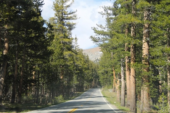 paved road through trees in sunshine