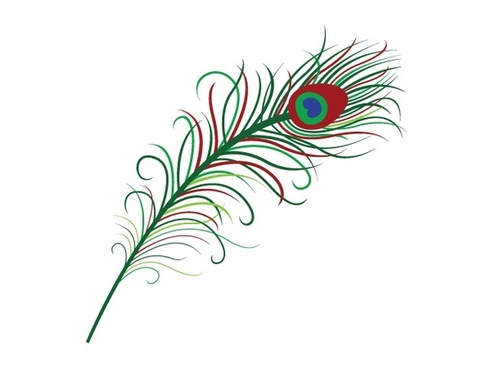 peacock feather vector illustration with color style