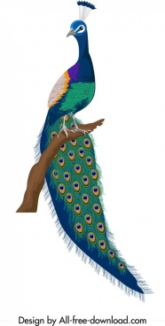 peacock icon colorful elegant decor