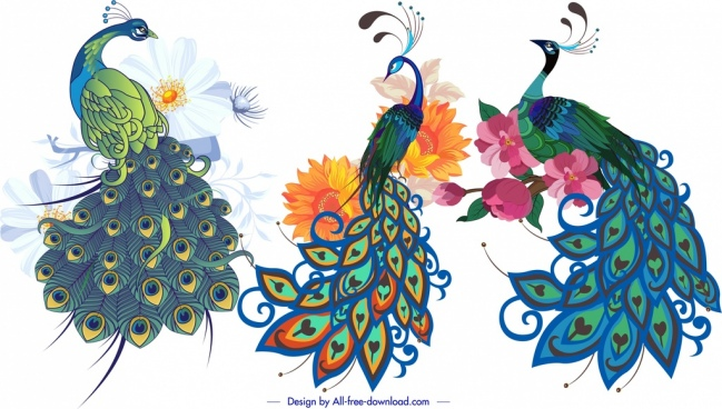 peacock icons colorful classical handdrawn sketch