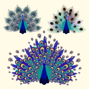 peacock free vector download 124 free vector for commercial use