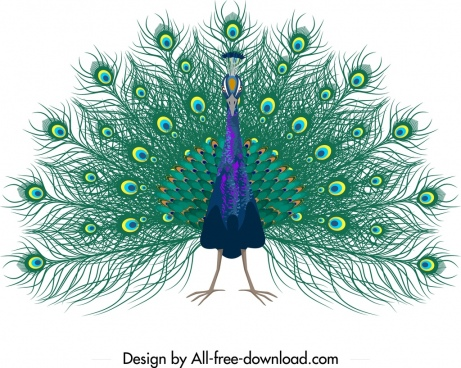 peacock painting sketch colorful showy decor
