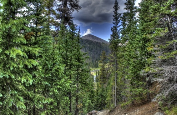 peak between the trees at rocky mountains national park colorado