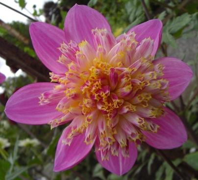 pearl flower pink