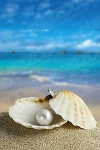 pearl shells on the beach stock photo