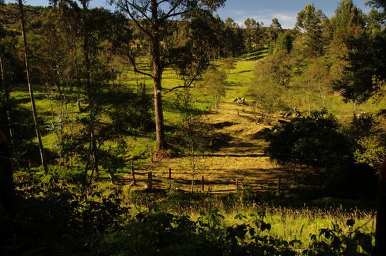 peasant landscape