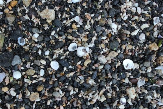 pebbles and shells