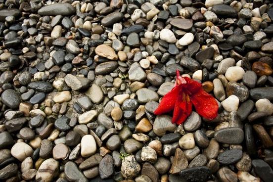 pebbles pebble nature