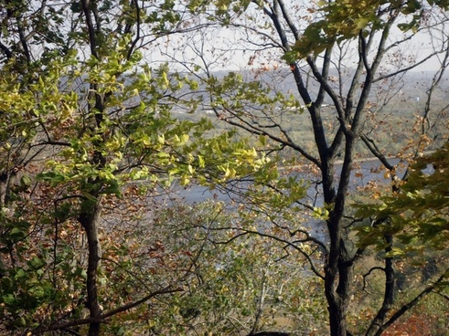 peering at mississippi through trees at effigy mounds iowa
