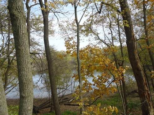 peering at the yellow river through trees at effigy mounds iowa