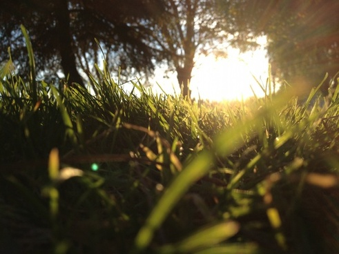 peering through grass at ground level at sun shining through trees