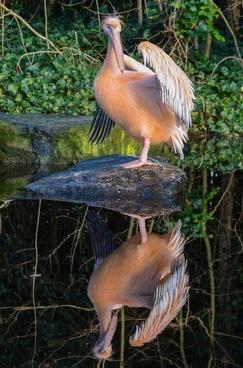 pelican mirror