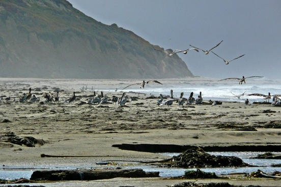 pelicans beach shoreline